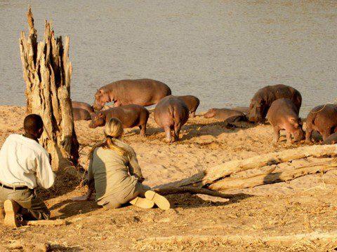 Smekmånad i Zambia